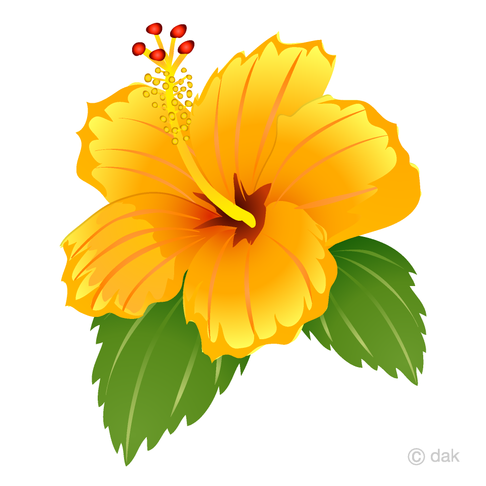 Yellow Hibiscus Clipart