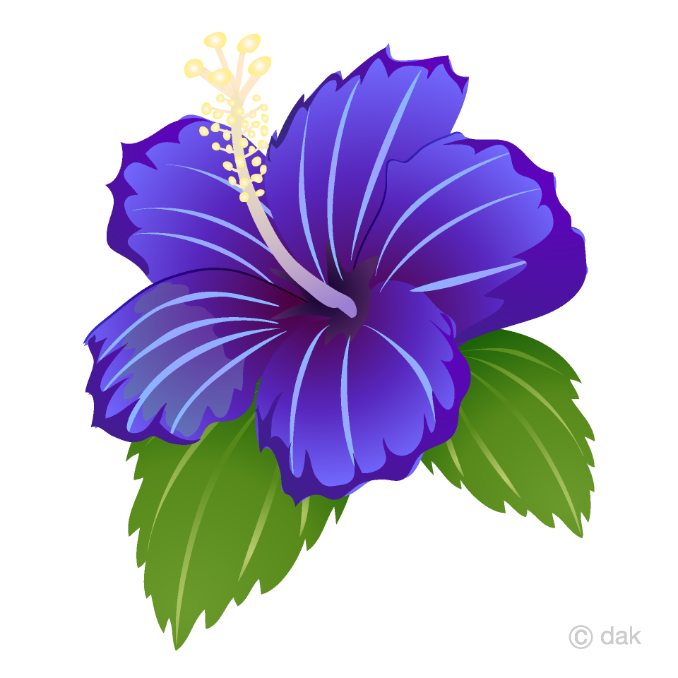 Blue Hibiscus Clipart Free Pictureillustoon