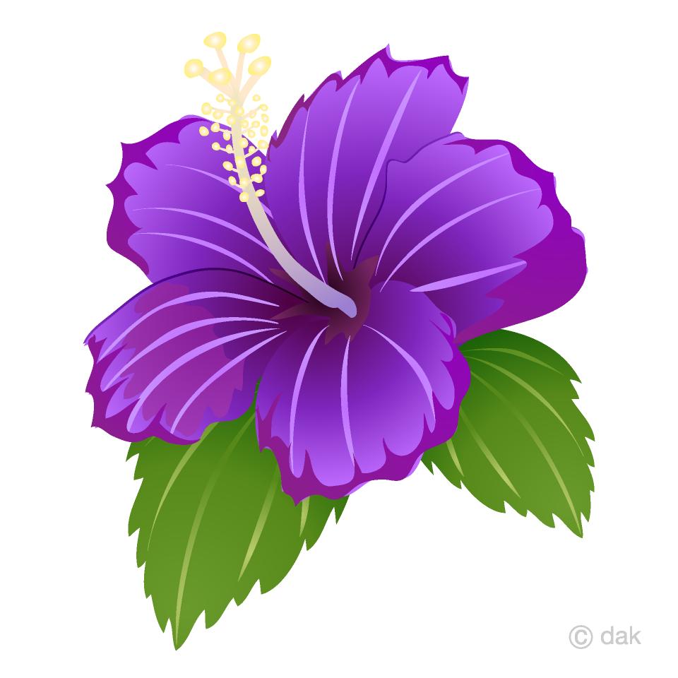 Purple Hibiscus Clipart Free Pictureillustoon