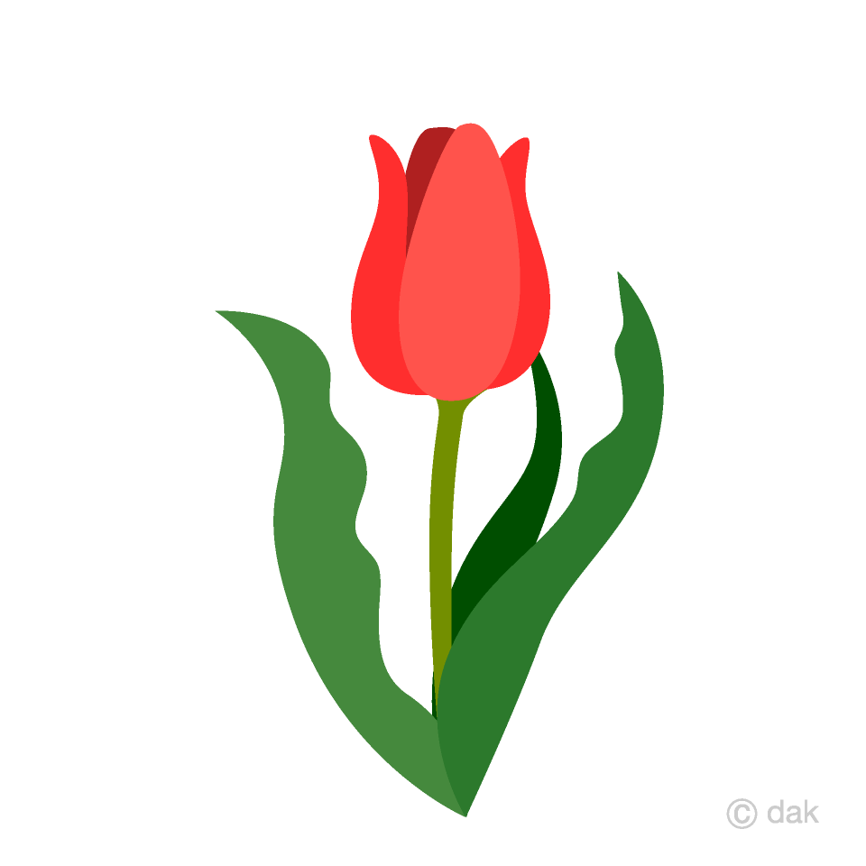 Red Tulip Clipart