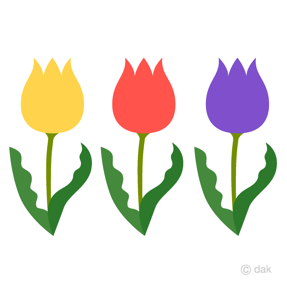 Three Tulip Flowers