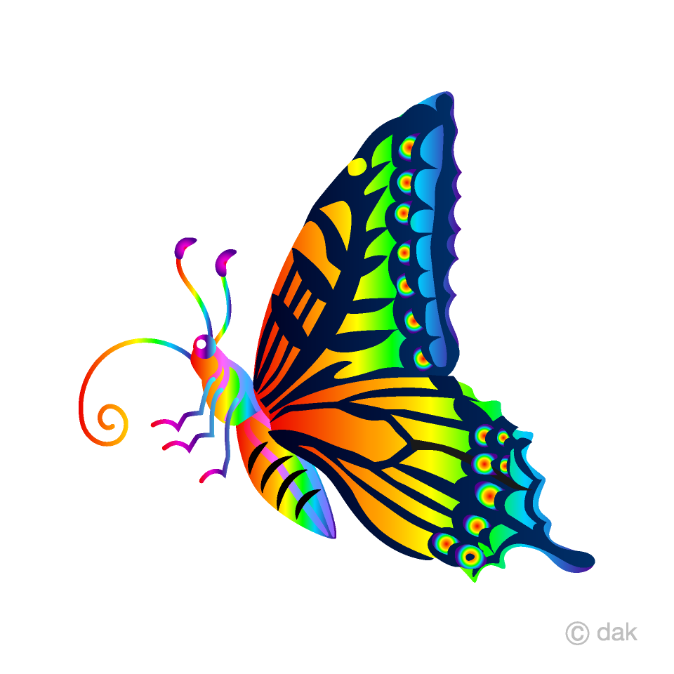 Rainbow Colorful Butterfly with Side