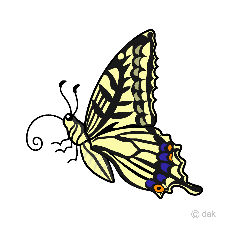Yellow Swallowtail Butterfly with Side