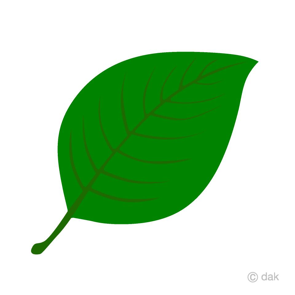 Green Leaf Clip Art