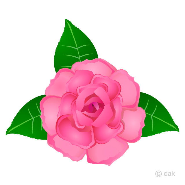 Pink Rose Flower Clipart