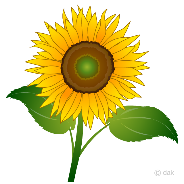 Sunflower. One clipart free picture