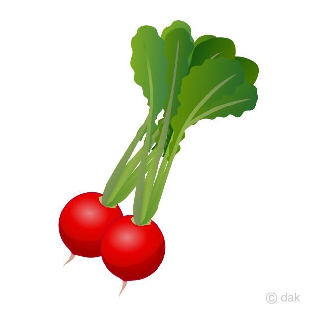 red radish clipart free png image illustoon  illustoon