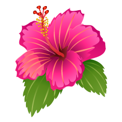 Pink Hibiscus Clipart