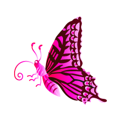 Pink Colorful Butterfly with Side