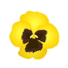 Pansy Flower Clipart