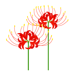 Lycoris Flower Clipart