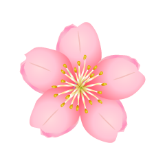 Cherry Blossom Flower Clipart