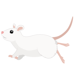 Running White Mouse