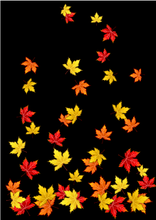 Autumn Leaves on Black Background