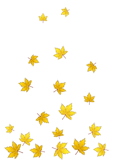 Yellow Fallen Leaves Background