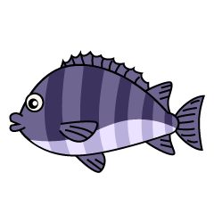 Sea Bream Clipart
