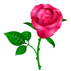 Beautiful Pink Rose Clipart