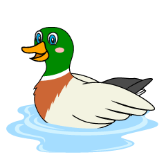 Floating Mallard Clipart