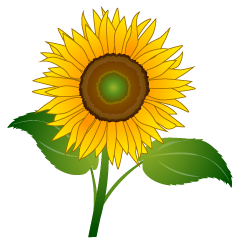 One Sunflower Clipart
