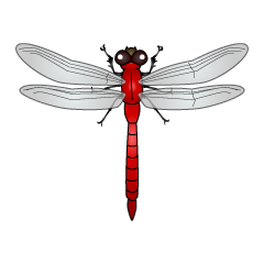 Red Dragonfly Clipart