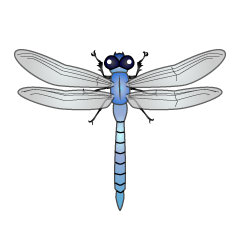 Blue Dragonfly Clipart