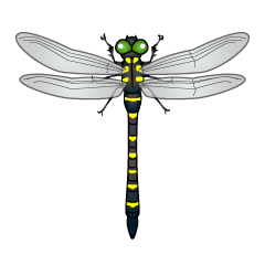 Black and Yellow Dragonfly Clipart
