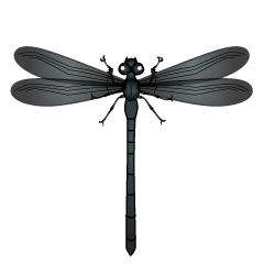 Black Dragonfly Clipart