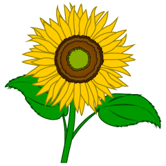 Simple Sunflower Clipart