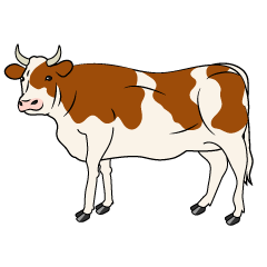 Cow with Brown Looking
