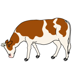 Cow with Brown Eating