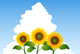Sunflowers in Sky Background