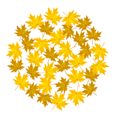 Yellow Fall Leaves Circle