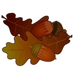 Acorns and Fallen Leaves