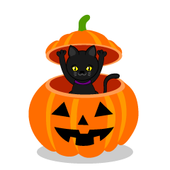 Black Cat in Halloween Pumpkin
