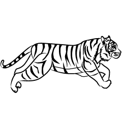 Tiger Running Black and White