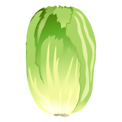 Chinese Cabbage Clipart